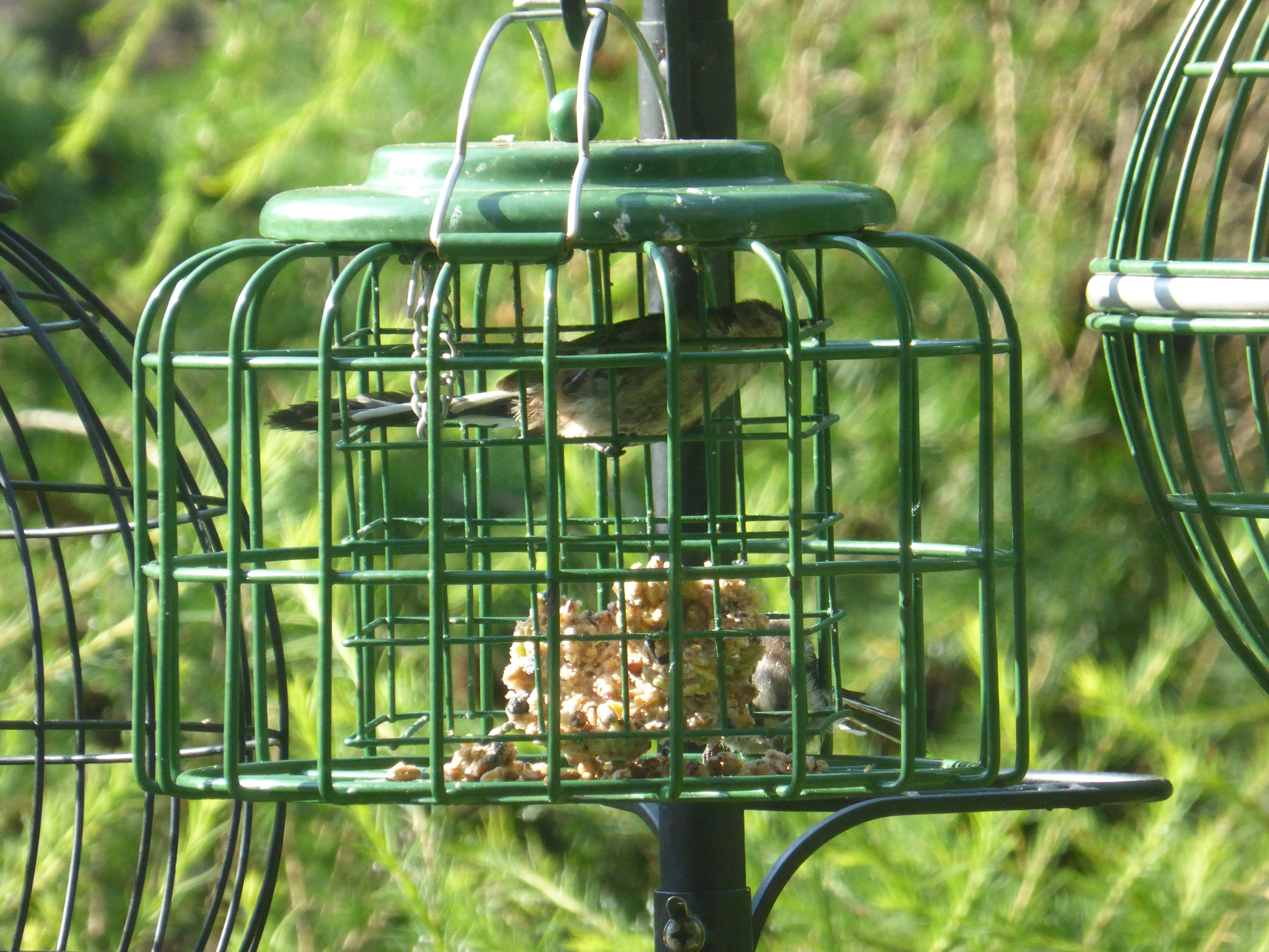 ways on keep feeders squirrels proof hq your effective squirrel feeder watching off bird to