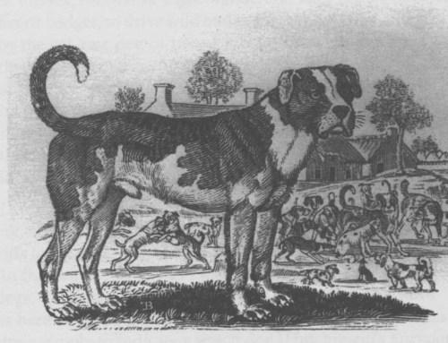 mastiff 1700 ccccccc