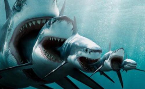 sharks xxxxxxxxxxxxxxxxxxxxxxxxxxxxxxx