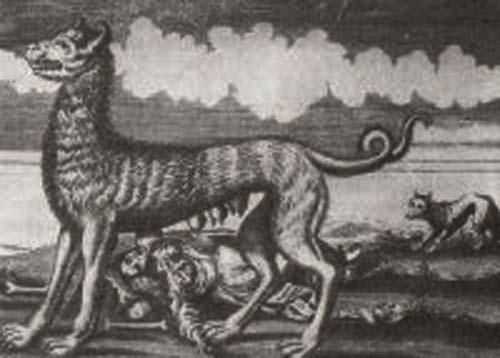 concept of wolf xxxxxx