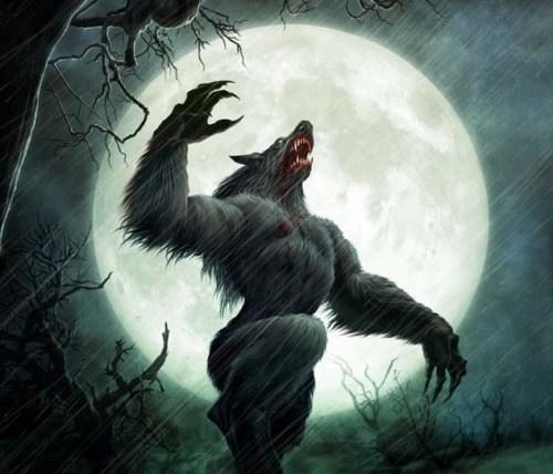 wolf xxxxxx