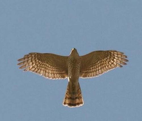 zzzzz sparrow