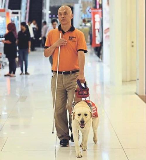 zzzzzz guide_dog_
