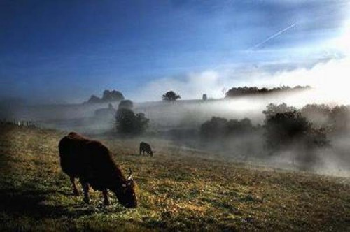 autumn mists zzzzzz