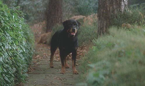 hellhound zzzzz