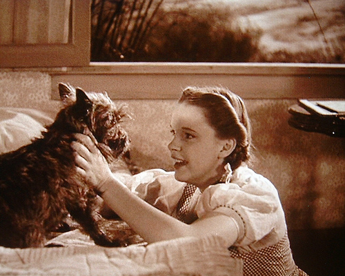 Dorothy-And-Toto-