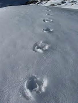 yeti tracks
