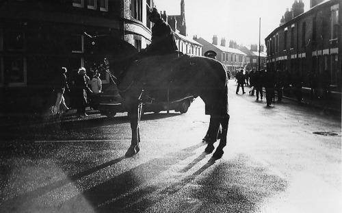 C x police horses - Copy (2)