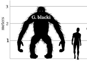 blacki