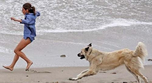 DogChasing