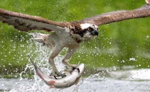 osprey againxxxxxxxxxxxxxxxxxxxxxxxxxxxxxxxxxxx