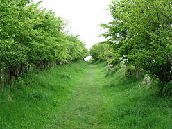 The_Hadrian's_Wall_Path_follows_a_'green_lane